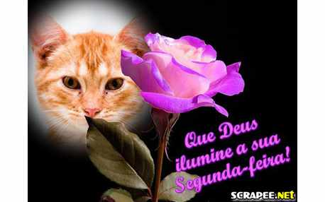 Montagem de Fotos1176 rosas roxa