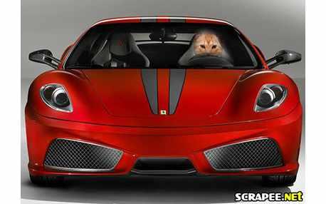Moldura - Ferrari