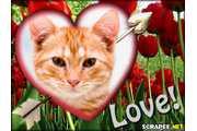 1353-love