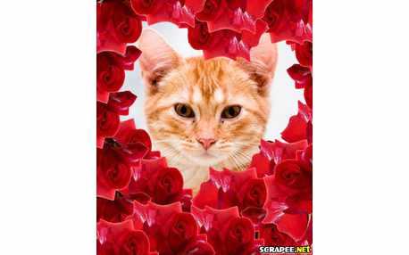 1382-muitas-rosas