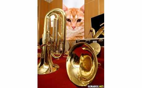 Moldura - Instrumento Dourado