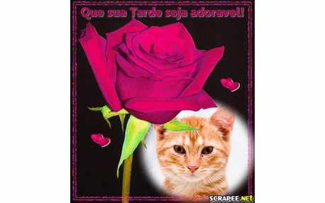 Moldura - Flor Da Tarde