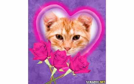 Moldura - Rosas Pink