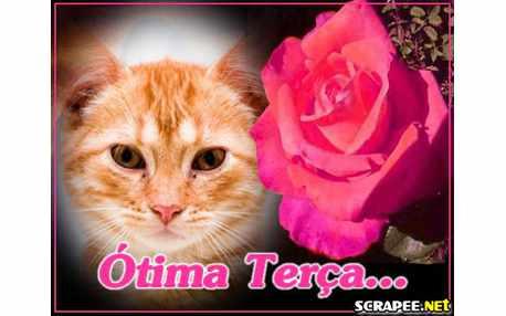 Moldura - Rosa Cor De Rosa