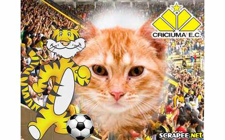 Moldura - Criciuma Esporte Clube