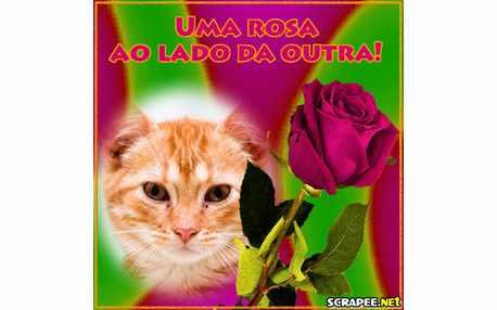 Moldura - Rosa