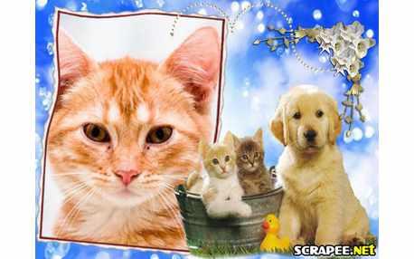 Moldura - Caes E Gatos