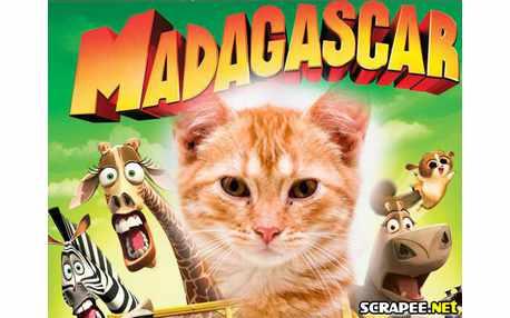 Moldura - Mandagascar