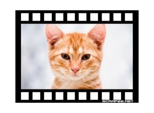 filme-fotografico