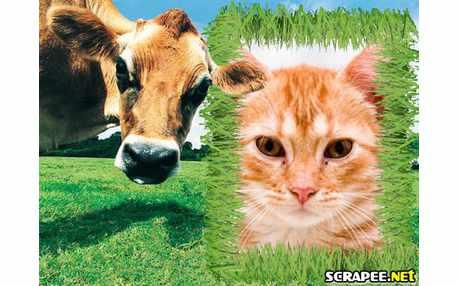 Moldura - Vaca