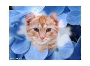 Moldura - Flores Azuis