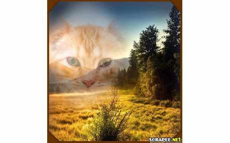 Moldura - Nascer Do Sol