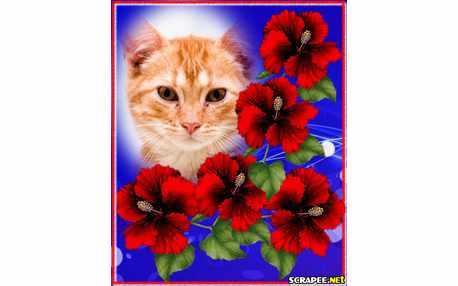 Moldura - Flores Maravilhosas