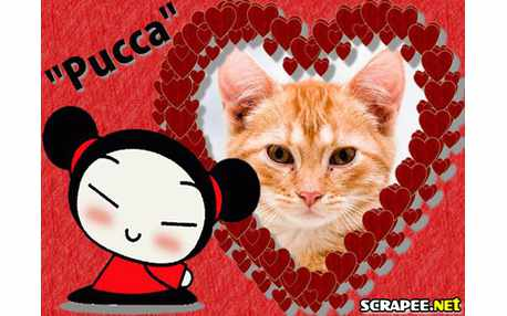 2383-pucca