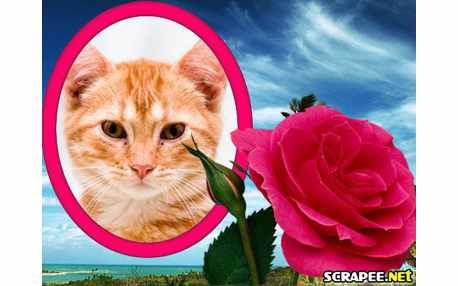 2488-flor-rosa