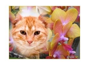 Moldura - Belas Flores