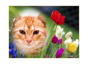 Moldura - Flores Variadas