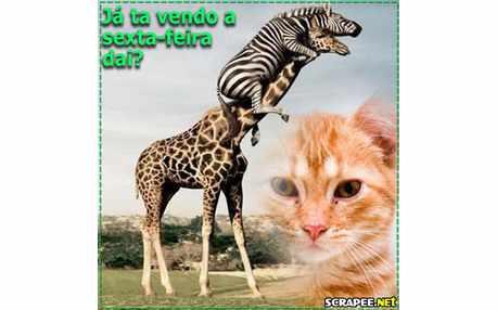 Moldura - Girafas