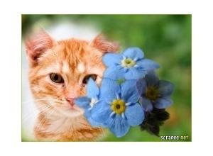 Moldura - Flores Azuis 2