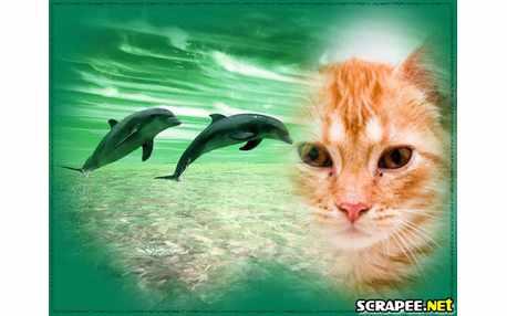 Moldura - Dupla De Golfinhos