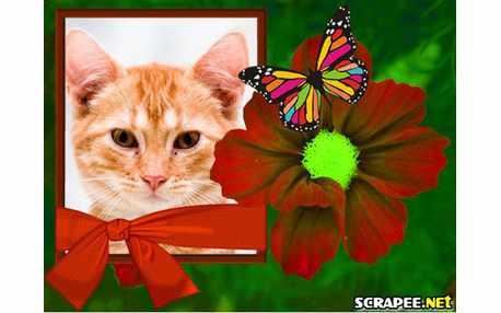 2812-borboleta-na-flor