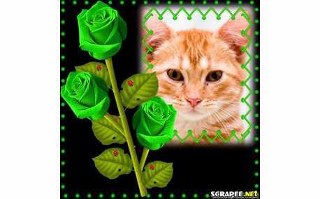 2826-rosas-verdes