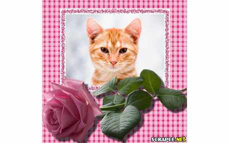 2832-rosa-cor-de-rosa