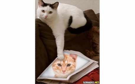 Moldura - Cat