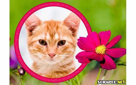 2843-flor-pink