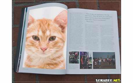 Moldura - Publicacoes Em Revista