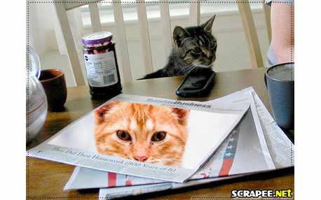 Moldura - Gato Na Mesa