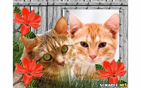 Moldura - Gato No Jardim
