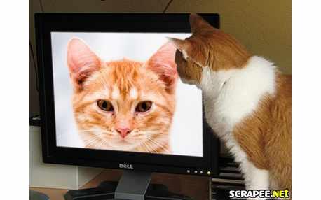 2893-gato-assistindo-tv