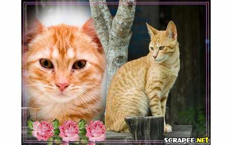 Moldura - Gato Domestico