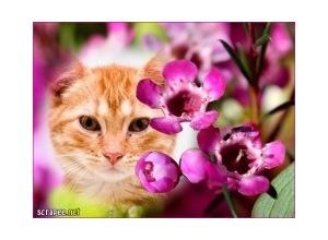 Moldura - Entre Flores Roxas