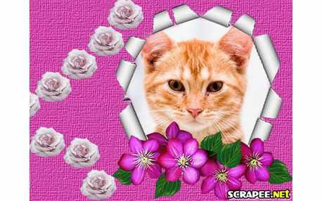 2926-flores-lilas