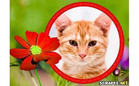 Moldura - Flor Vermelha