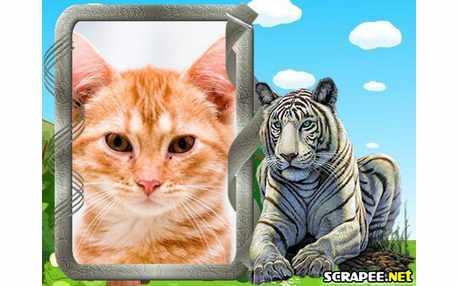 Moldura - Tigre