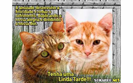 Moldura - Gato Amarelo