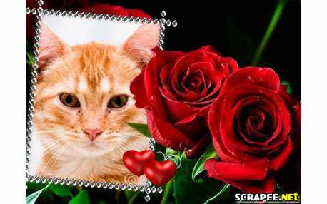 3052-rosas-vermelhas