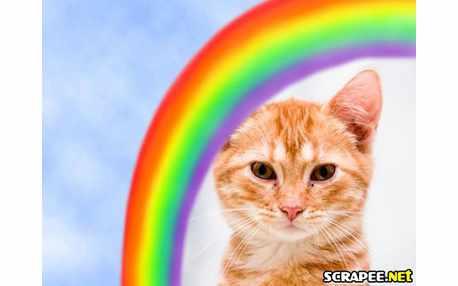 3054-arco-iris