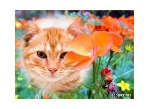 Moldura - Belas Flores Laranjas