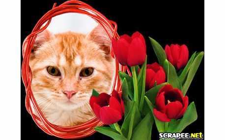 3078-tulipas-vermelhas