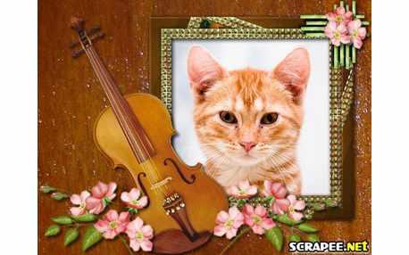 3092-violoncelo