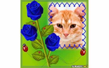 Moldura - Rosas Azuis