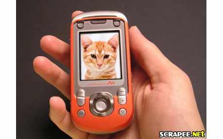 Moldura - Cell Phone