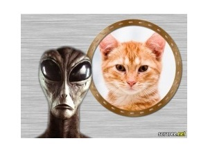 Moldura - Extraterrestre Extranho