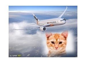 Moldura - Aviao Voando