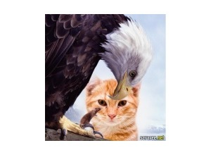 aguia-e-rato
