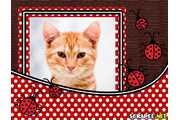 3254-joaninhas-vermelhas